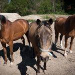Pferde fotografieren